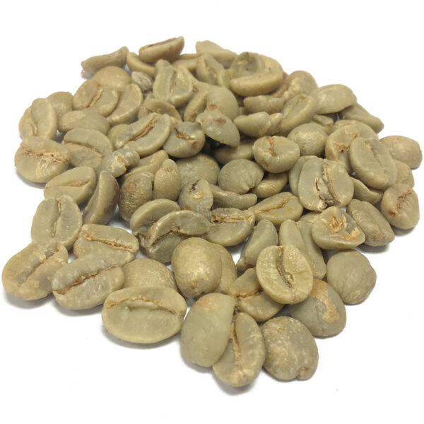 1st-Cup Brazilian Bourbon Santos GREEN Coffee Beans - by the pound